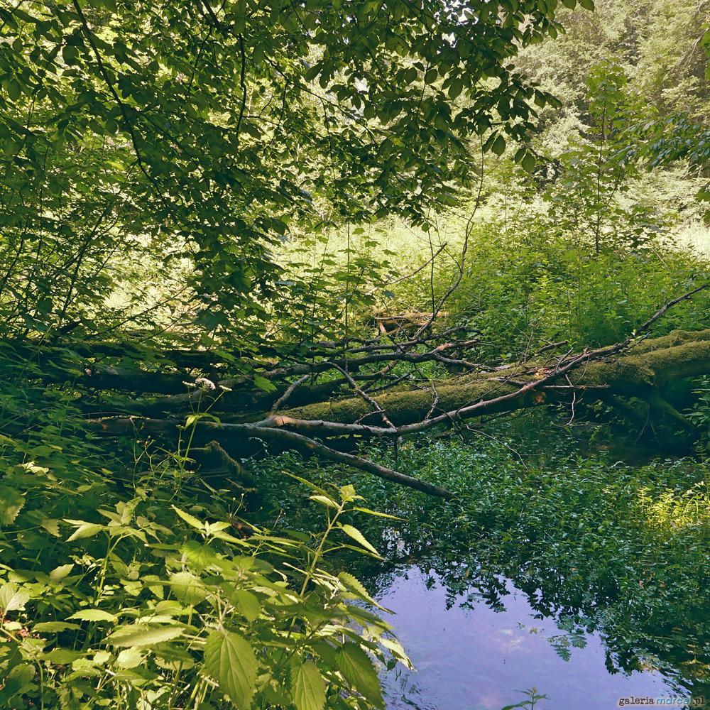 Dolina Sąspowska w Ojcowskim Parku Narodowym (woj. małopolskie)